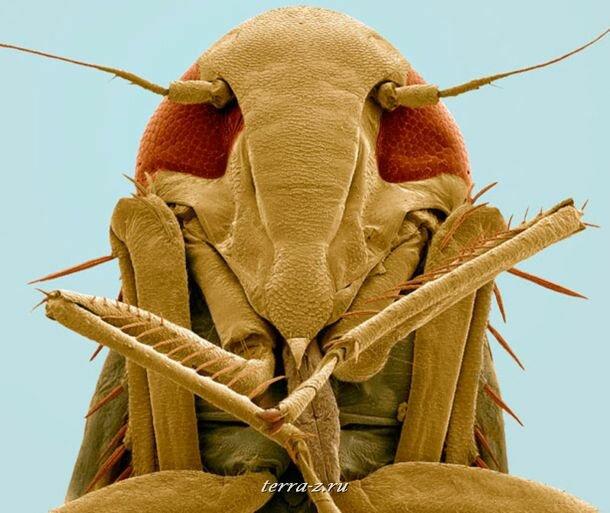 Насекомые под электронным микроскопом
