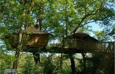"""Необычные отели: отель """"Дом-на-дереве"""" (Франция)"""