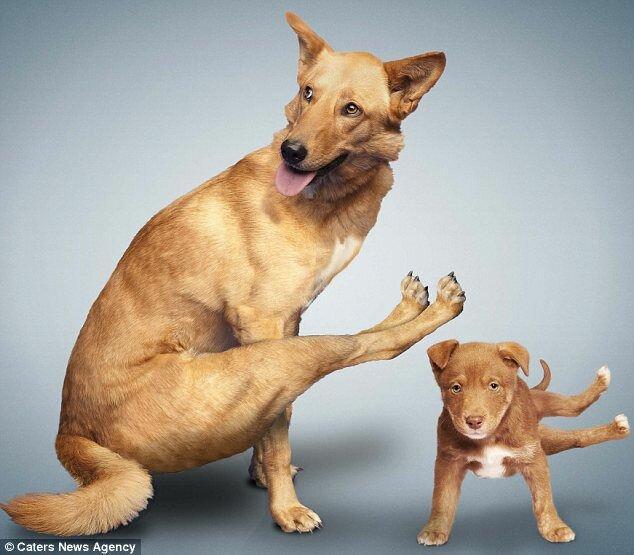 Собачья йога от Дэна и Алехандры Боррис (США)
