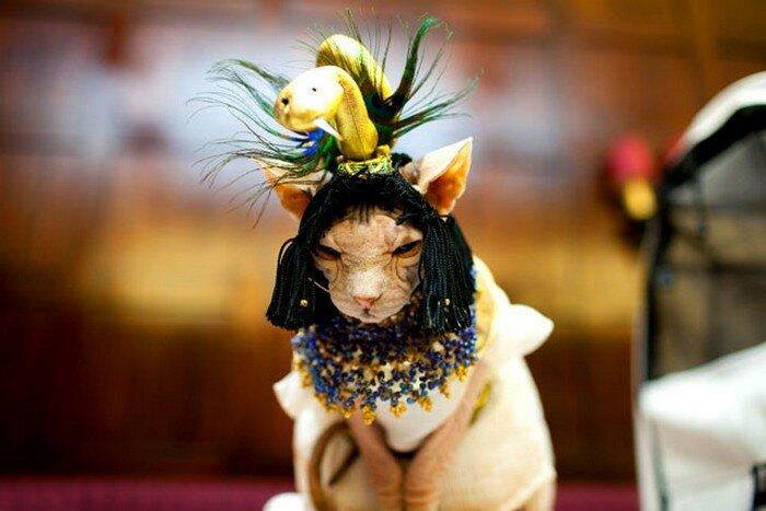 Кошачья мода на Meow Wear Fashion Show (США)
