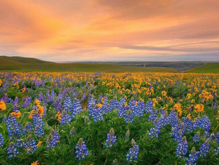 Долина цветов: рай на земле (Индия)