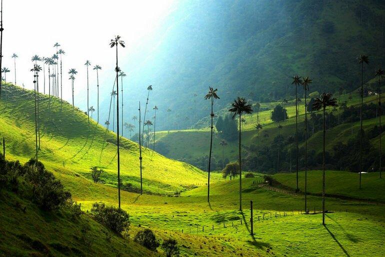 Долина самых высоких пальм на планете (Колумбия)