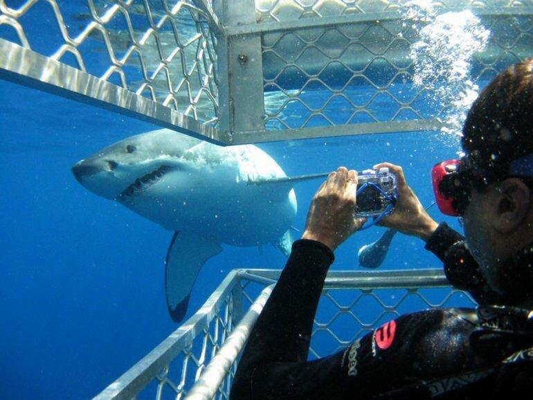 Акулий дайвинг в Гансбае (Африка)