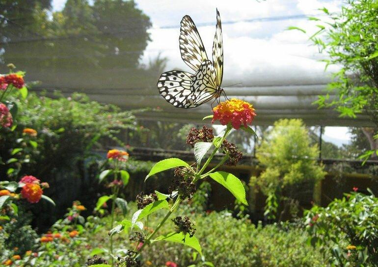 Сад Бабочек на острове Боракай (Филиппины)
