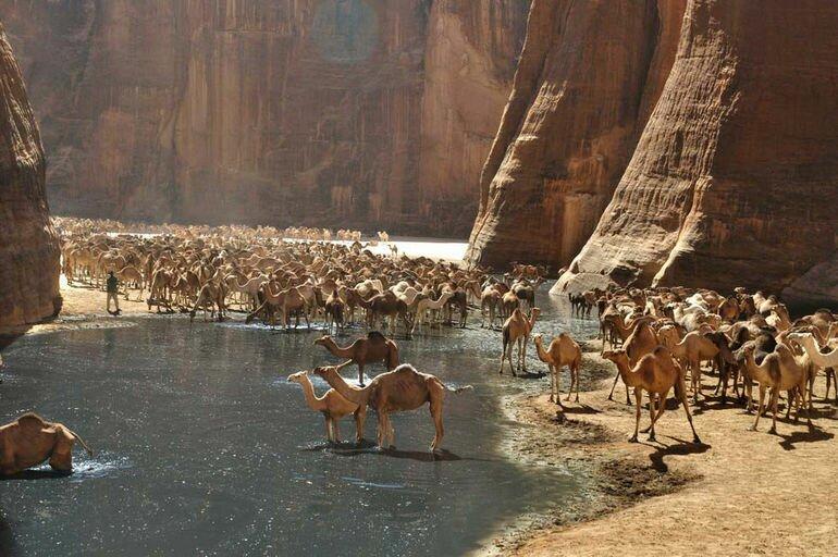 Гельта д'Аршей: экологическое чудо Сахары (Чад)