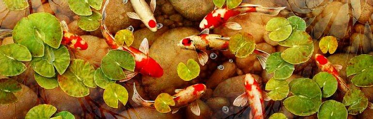 Декоративные рыбки для садового пруда