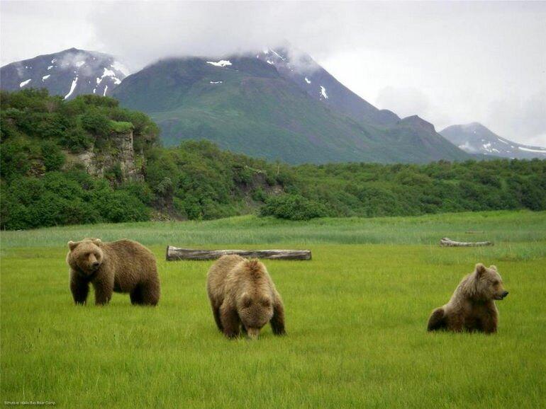 «Медвежий лагерь» на Аляске (США)